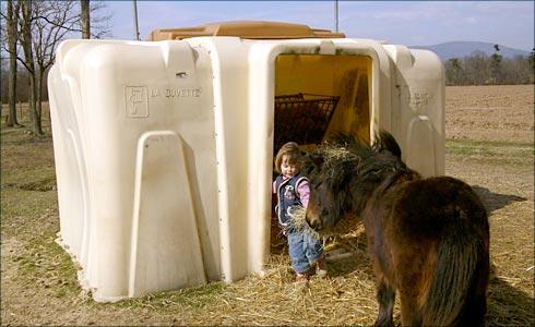 shetland poneys vds beau poulain type mini shet gris souris pie. Black Bedroom Furniture Sets. Home Design Ideas